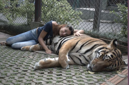 Alexandra playing with tigers in Thailand